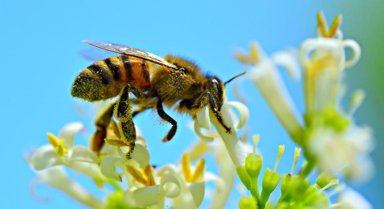 urban agriculture, honeybee, Georgia Tech Bee Project, edible landscape